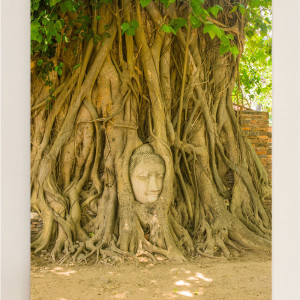 Buddha Head in Tree Thailand